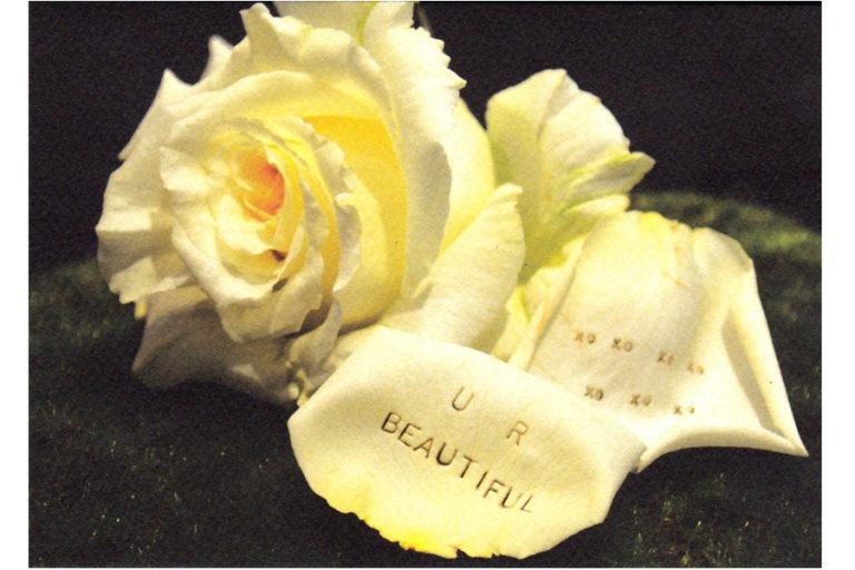 c415-u-r-beautiful-rose