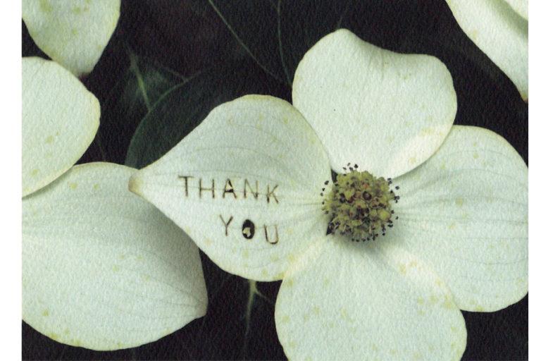 c422-thank-you-dogwood-blossom